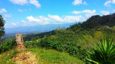 A view from Finca Cerro Bueno in La Paz, Honduras.   www.hondurascoffeefamily.com