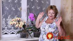 Pestovateľka ukázala nezvyčajný trik, ako prinútiť orchideu kvitnúť: Nezáleží, či je jar alebo zima – s týmto kvitne kedy chcete! Plant Therapy, Summer Dresses, Plants, Beauty, Women, Youtube, Gardens, Tejidos, Flowers