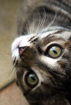 Do i have beautiful eyes