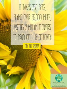 Fun Fact About Honey! More at www.wherefoodcomesfrom.com