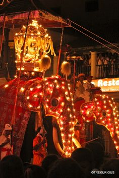 Buddhist Traditions, Drummers, Kandi, Buddhism, Elephants, Sri Lanka, Dancers, Places To See, Musicians