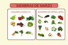 Si quieres saber qué sembrar en Madrid en el mes de marzo haz click!
