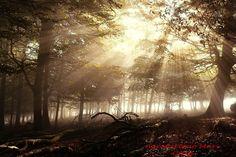 Niebla en el hayedo que da vida a las hayas y a la fauna oculta del bosque www.casaruralnavarra-urbasaurederra.com http://nacedero-rio-urederra.blogspot.com.es http://navarraturismoynaturaleza.blogspot.com.es/ http://mundoturismorural.blogspot.com.es/