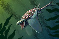 Creature Art. Kelp Turtle