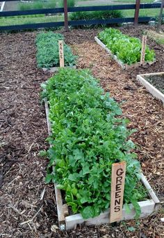 the 3 secrets to a weed free garden, diy, gardening, landscape, Mulch is a big key to a weed free garden