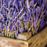 Dried Lavender Box Small - $85.00 Box of 25 dried lavender bundles.