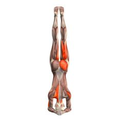 supported-headstand