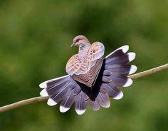Morning Doves love eating seed in my backyard. Denise Deickmann