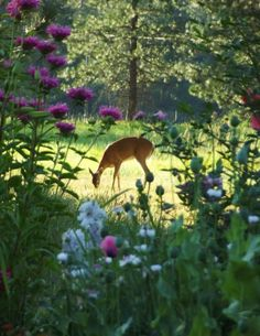 Photoshop? In my yard the deer would be eating the flowers.
