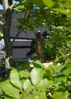 Amazing Sculptures from Marshall Murray, www.marshallmurray.co.uk