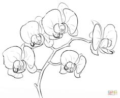 Orchid | Super Coloring