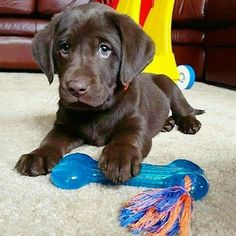 I really want this puppy!