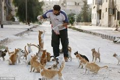 SYRIA:Ambulance driver Alaa feeds dozens of stray cats in his neighbourhood of Masaken Hanano in Aleppo.Alaa spends around $4 (£2.50) of his savings each day on meat to feed around 150 strays.Read more: http://www.dailymail.co.uk/news/article-2770503/The-real-hero-Syrian-civil-war-The-ambulance-driver-spends-savings-feeding-orphaned-cats-Aleppo.html#ixzz3mfeLBNNG  Follow us: @MailOnline on Twitter | DailyMail on Facebook