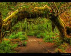Enchanted forest - The Hoh Rain Forest in Olympic National Park, Washington State, USA. Taken by Ann Badjura. Such an amazing place to visit, I'd love to go there again some day!