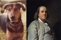 Talking Dogs at For Love of a Dog: What's in a Dog Name. How did you come up with your dog's name? Here's our For Love of a Dog pack and how they got their names! Dog Stories, Benjamin Franklin, Photo Story, Dog Names, Fleas, Humor, Dogs, Dog Stuff, Fictional Characters