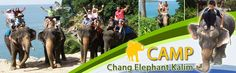 Camp Chang Kalim - Elephant Trekking Tours Patong Beach Phuket Thailand