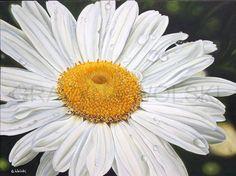 "FINE ART PRINT, Giclee  art print - ""The Girl next Door"",   9""x 12"",  painting, daisy painting, daisy close up, white flower, daisy"