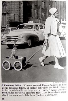 1956 - Cat in Times Square This is me someday!