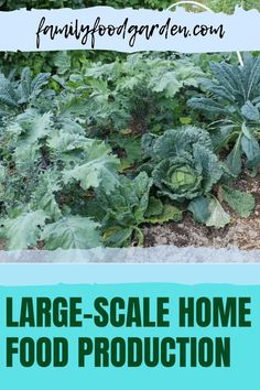 Do you want to learn more about large-scale home food production? Having the ability to grow your own fruit and vegetables at home is incredibly satisfying, but it is a much harder job than you think. This article by Family Food Garden will help you get your harvest together. Check it out now for more. #homegrownveggies #vegetables #vegetablegarden #fruitandvegetables Healthy Fruits And Vegetables, Organic Vegetables, Home Food, Garden Planning, Grocery Store, Preserves, Family Meals, Harvest, Home And Garden