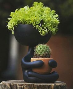 Pin by Plants Bank on Best Cactus and Succulents in 2020 Indoor Garden, Garden Art, Indoor Plants, Garden Design, Hanging Plants, House Plants Decor, Plant Decor, Cactus Flower, Flower Pots