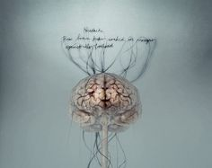 Brainstorm exhibition in London. Giving much love to the human brain through art. <3 Neuroscience!