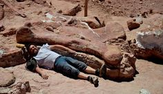 Fossilized Bones of Largest Known Dinosaur Discovered in Argentina