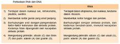 prinsip dasar bioteknologi modern,replikasi dna,tahapan sintesis protein,tabel,perbedaan dna dan rna pdf,pada virus,sintesis protein,urutan sintesis protein,