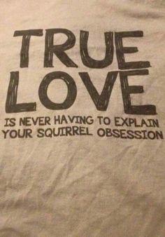 Squirrel Art, Cute Squirrel, Baby Squirrel, Squirrels, Baby Animals, Cute Animals, Squirrel Pictures, Pet Treats, My Spirit Animal