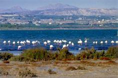 El Parque Natural de las Lagunas de La Mata y Torrevieja tiene una superficie de 3.700 hectáreas, de las cuales 1.400 corresponden a la laguna de Torrevieja y otras 700, a la de La Mata.    Aunque geológicamente ambas lagunas se sitúan en sendas zonas deprimidas y cerradas al mar, ambas se encuentran comunicadas entre sí y con el mar por medio de tres canales artificiales (llamados aquí Acequiones).