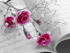 الورد للورود ومسائكم ورد