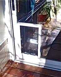 Why We Recommend Security Boss Pet Doors For Through Glass Installs