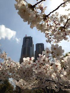 桜と都庁〜 pic.twitter.com/SpMtfE9G5c