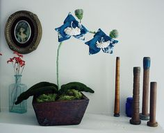 blue double blossom orchid by winsome hollow, via Flickr