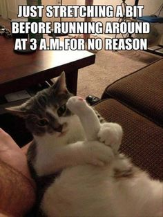 Funny images of the day -71 pics- Just Streching A Bit Before Running Around At 3 Am For No Reason