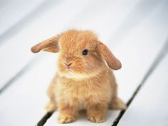 Aww....cute widdle baby BUNNIES!!!  Ahem. Okay. I'm okay now.