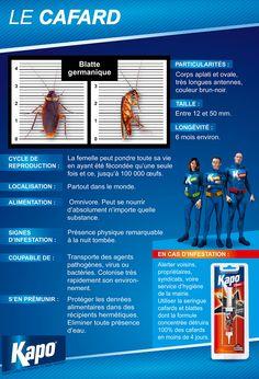 Insectes : Infographie la fiche d'identité du cafard (insecticides Kapo)