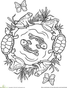 Pond Life Coloring Page  Coloring Happy and For kids