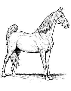 Dibujo para colorear de caballos (nº 10)