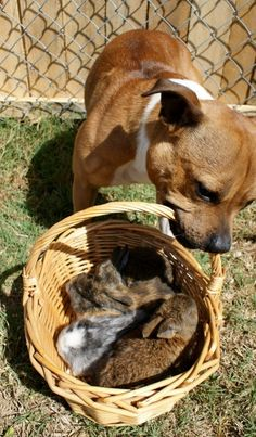Oh! Now the basket is full of bunnies. | What's The Cutest Easter Photo That Ever Happened?