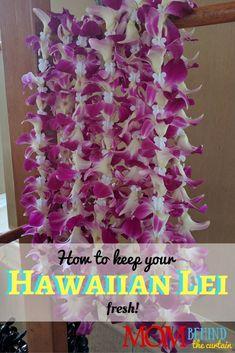 Maui vacation tips - here's how to keep your Hawaiian flower lei fresh! Maui Travel, Hawaii Vacation, Maui Hawaii, Travel Tips, Oahu, Exotic Flowers, Fresh Flowers, Lilies Flowers, Purple Flowers