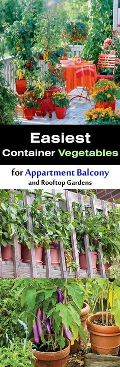 easiest container pot vegetables for appartment balcony