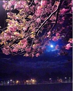 A blossom tree and a full moon taken at 2am in Edinburgh.