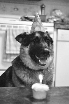 Sweet dog having a birthday party with hat and cupcake  via: supreme-essence: