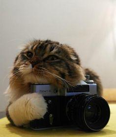 Photographer ?