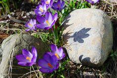 Kuistin kautta: Kevät ! Spring Flowers, Spring Time, Mars, Natural Beauty, Easter, Seasons, Garden, Nature, Plants