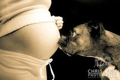 Baby Bump with Dog Maternity Photo (Chris Lang Photography)  Should prolly have a few of these... considering we have three of the things...