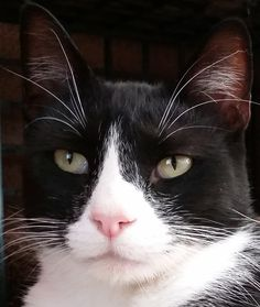 Brandon is a 2-year-old medium-haired tuxedo cat. He is independent but affectionate and likes other cats. He is neutered, vaccinated and costs $50. Apply with Another Chance Animal Welfare League Adoption Center at www.acawl.org. Call 229-7833. Go to www.redding.com for more pets.