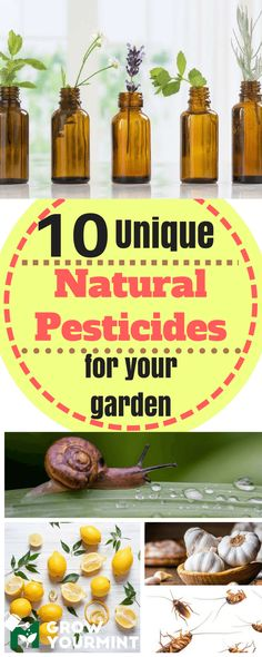 10 natural insecticides