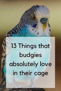 Budgie Food, Parakeet Food, Parakeet Care, Budgie Parakeet, Budgies Care, Diy Budgie Toys, Parrot Toys, Bird Cage Design, Diy Bird Cage