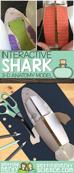 This shark dissection anatomy model can be used as a dissection-free shark exploration, a pre-dissection study tool, or even as a summative assessment for comparative anatomy. Students will be able to identify and explain the structure and function of Biology Lessons, Science Biology, Science Fair, Science Lessons, Teaching Science, Science Education, Science For Kids, Earth Science, Life Science
